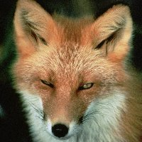 Foxes_and_hedgehogs