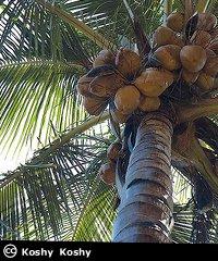 Incremental_Fruit