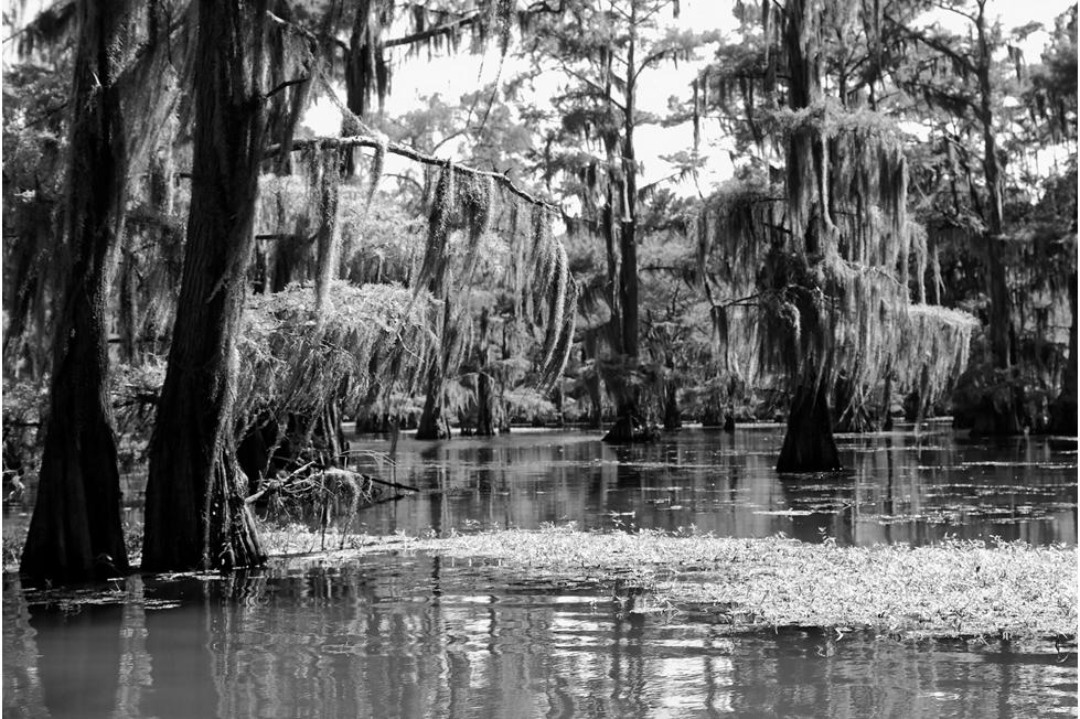 LPTA Toxic Swamp