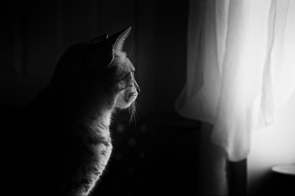 """Get from a postmortem only the wisdom in it - """"cat avoids cold stove-lids too"""""""