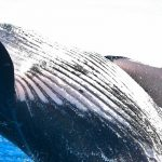 large-accounts-the-care-and-feeding-of-whales
